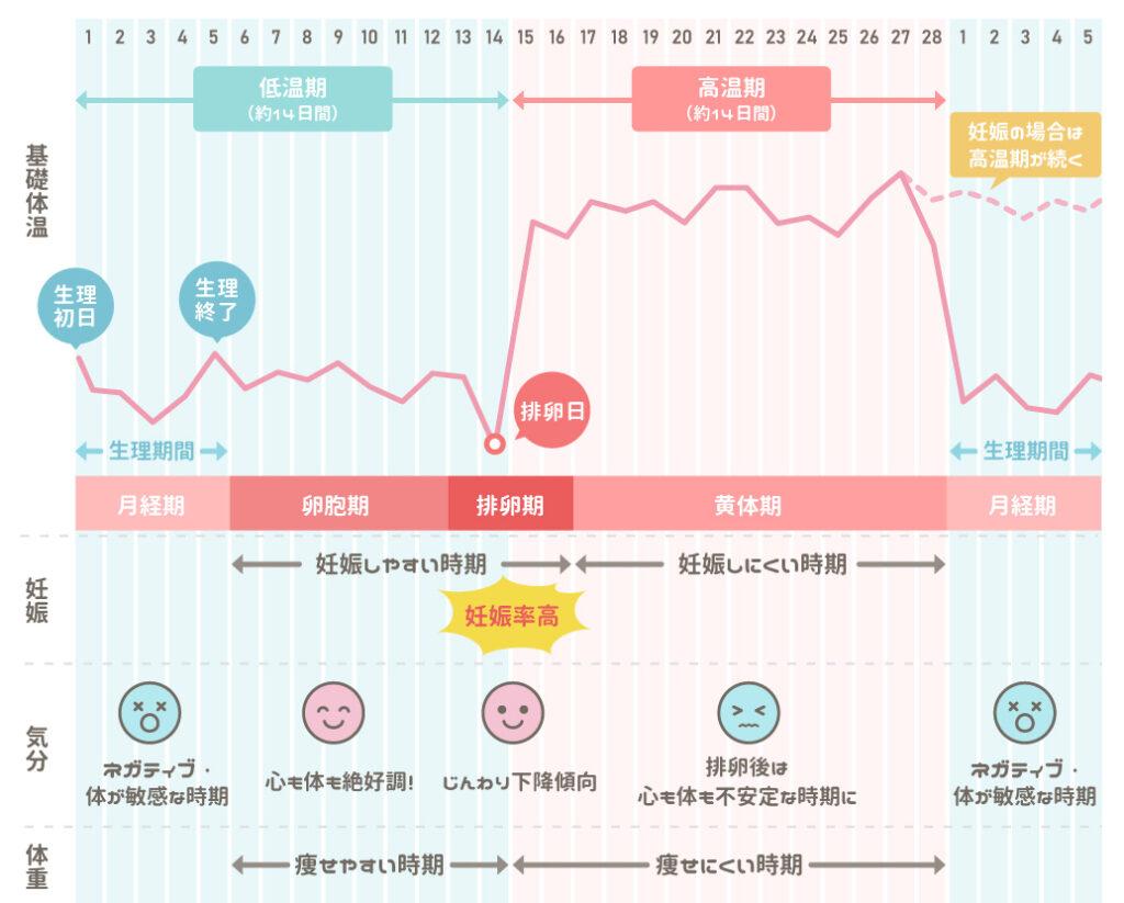 基礎体温の変化と低温期・高温期の特徴